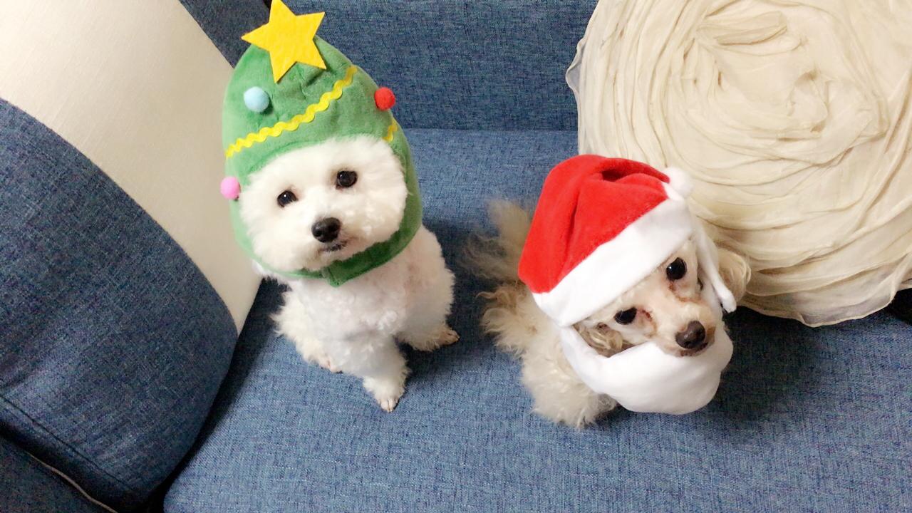 樫本クリスマス犬