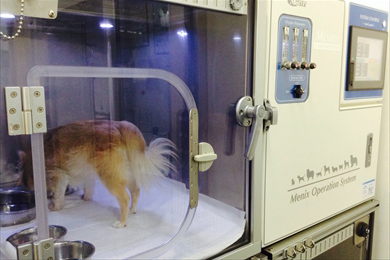 集中治療室(温湿度、酸素濃度完全管理;全3床)