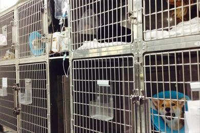 犬入院室(全12床)