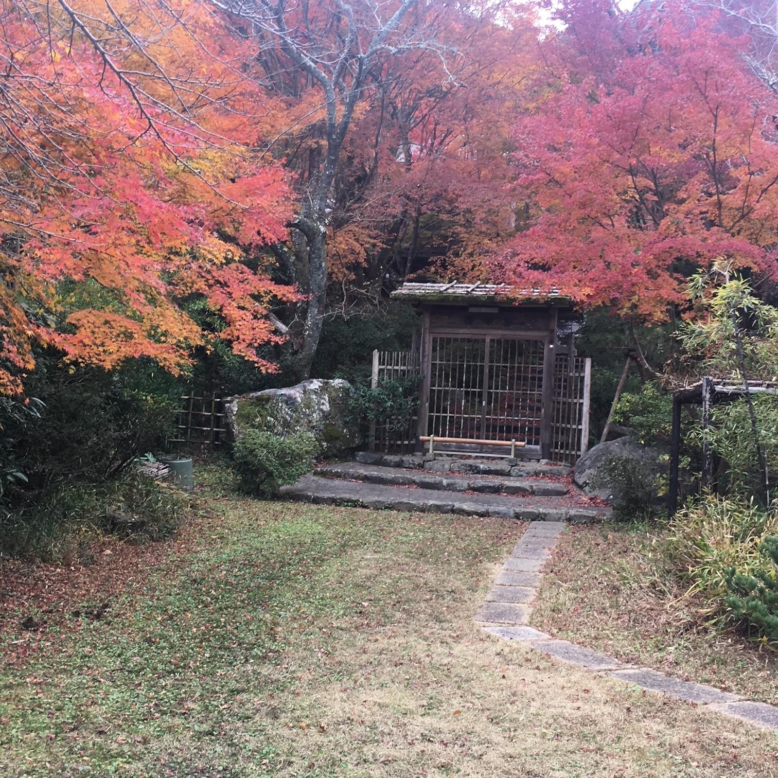 池谷紅葉4