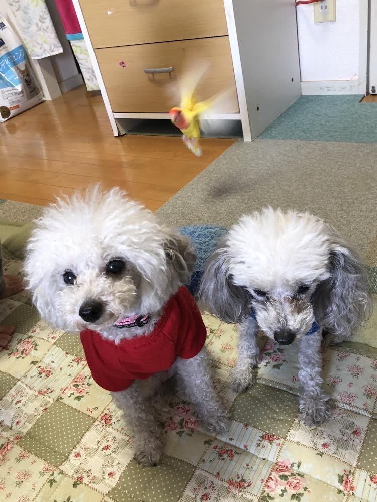 岡元犬インコ