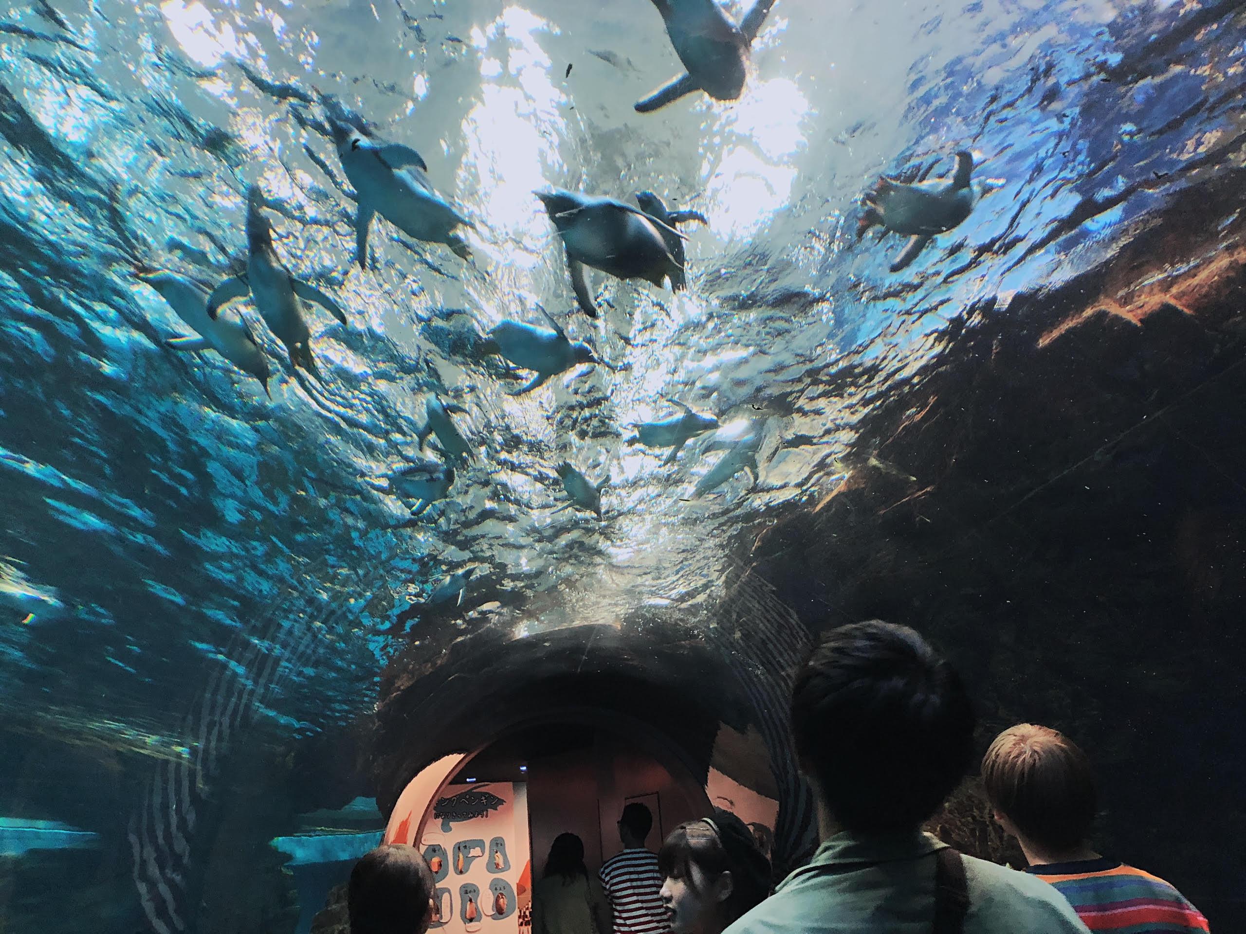 大神水族館